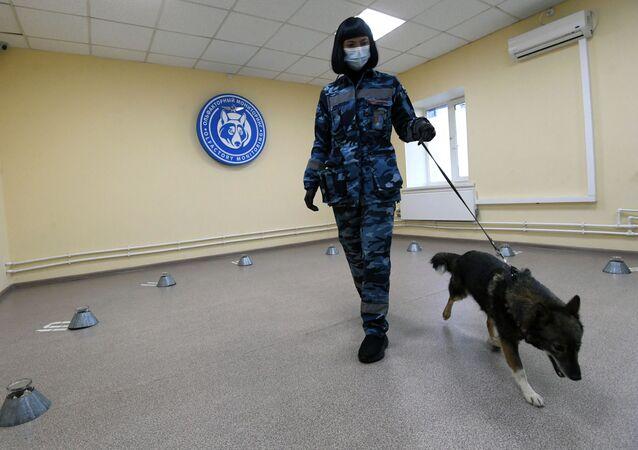 تدريبات كلاب الشرطة في شركة الخطوط الجوية أيروفلوت في مطار شيريميتيفو، موسكو 2 أكتوبر 2020