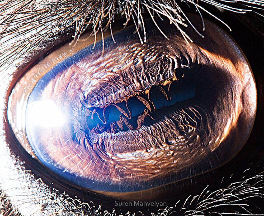 صورة مقربة لعين الجمل من قبل المصور سورين مانفيليان