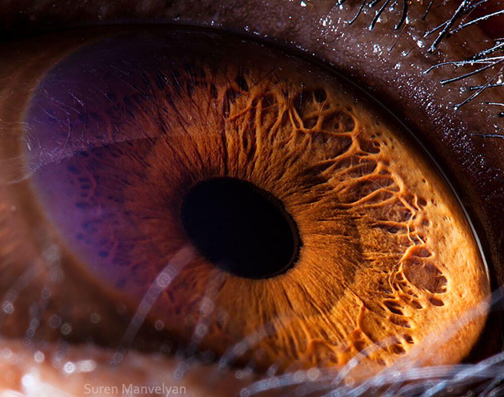 صورة مقربة لعين قرد من فصيلة شمبانزي من قبل المصور سورين مانفيليان