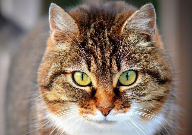 قطة شجاعة تنقذ طفلا من هجوم كلب مسعور