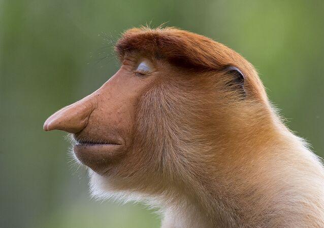 صورة بعنوان الهيئة للمصور الدنماركي موغينز ترول، الفائزة في فئة صور للحيوانات من مسابقة تصوير الحياة البرية لعام 2020