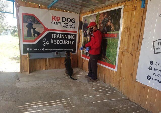 مشروع لتدريب الكلاب في تونس على التقصي المبكر عن سرطان الثدي بواسطة حاسة الشم