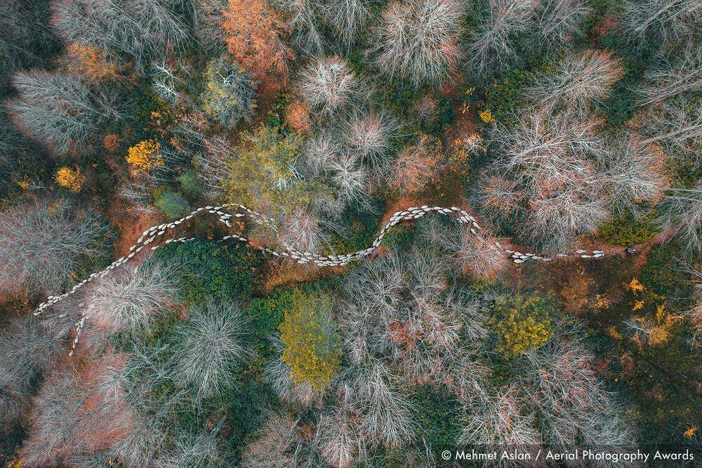 صورة بعنوان مسار في الغابة، للمصور التركي محمد أسلان، الفائزة في فئة التصوير الأشجار والغابات من مسابقة جوائز التصوير الجوي لعام 2020