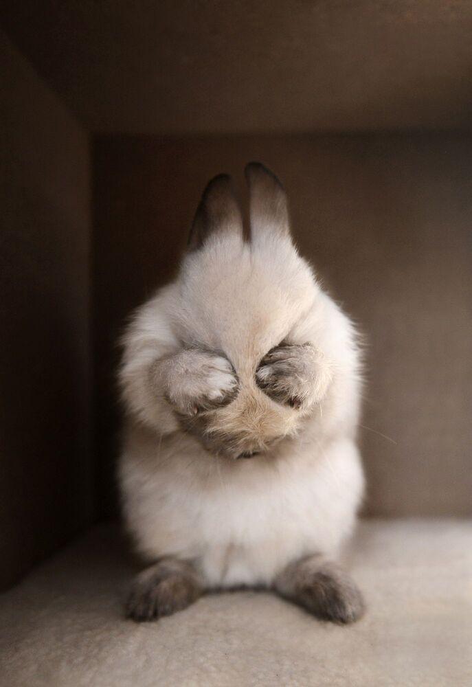 صورة بعنوان أرنب يغطي عيونه، للمصور الصيني تيانهانغ جانغ، التي فازت في فئة مميز/ الحيوانات الأليفة للمصورين المحترفين في مسابقة جوائز التصوير الدولية 2020