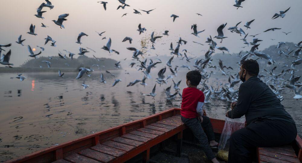 أب وابنه يطعمان طيور النورس بالقرب من ضفاف نهر يامونا خلال صباح مليء بالضباب الدخاني في نيودلهي، الهند، 29 أكتوبر 2020.