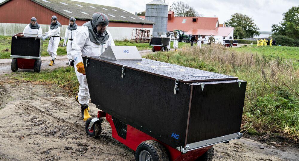 صورة لبدء عمليات قتل حيوانات المنك في الدنمارك بإشراف جهات صحية