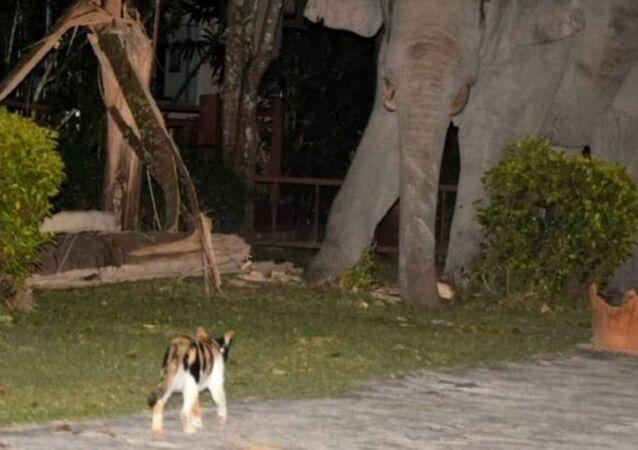 قطة شجاعة تواجه فيلا ضخما حاول اقتحام منزل أصحابها لسرقة الطعام