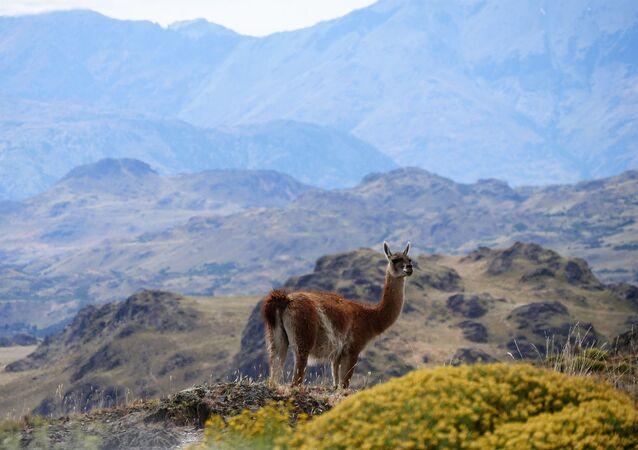 جبال باتاغونيا في تشيلي تفوز بلقب أفضل وجهة للطبيعة الخضراء في العالم لعام 2020