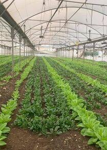مزرعة حاكورتنا بالضفة الغربية بفلسطين، المزرعة الصديقة للبيئة