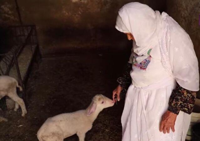 ام محمد.. سبعة عقود في تربية الأغنام
