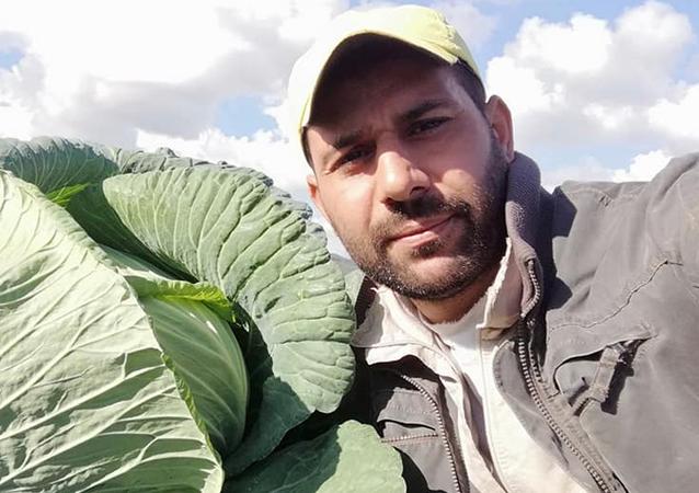 الملفوف السوري العملاق يقف إلى جانب المزارع في ظل الأزمة الاقتصادية