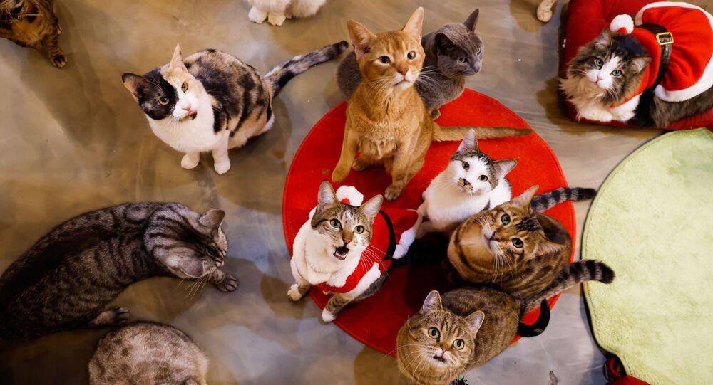 قطط تنظر إلى حديقة كات غاردين في سيؤل، كوريا الجنوبية، 14 ديسمبر 2020