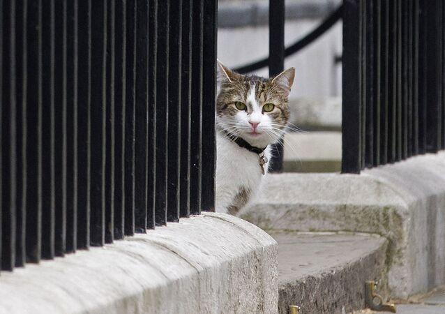 لاري قط رئيس الوزراء البريطاني