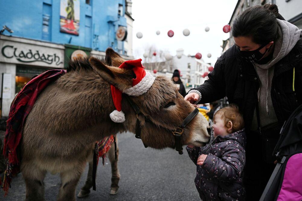 صوفيا فوكس، البالغة من العمر عامين، مرتبكة بحمار يرتدي قبعة بابا نويل في أحد شوارع التسوق وسط انتشار جائحة فيروس كورونا في مدينة غالواي، أيرلندا 22 ديسمبر 2020