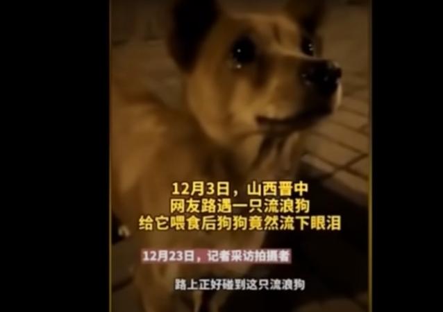 كلب ضال يبكي عند تقديم شخص غريب الطعام له