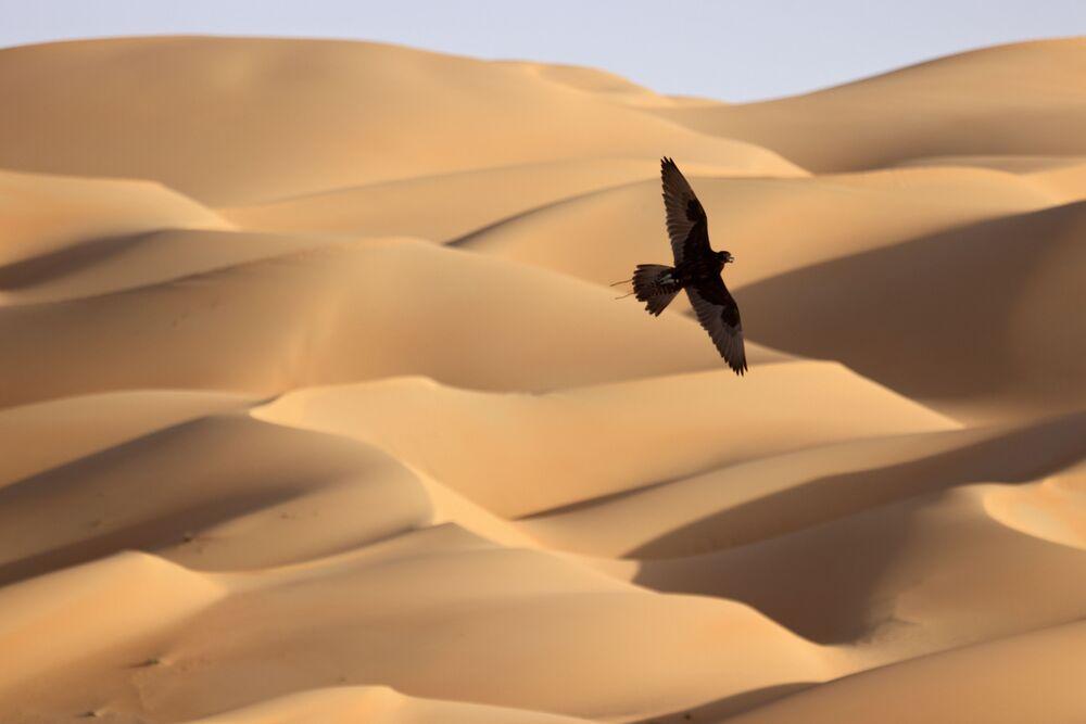 تدريب الصقور في صحراء ليوا، على بعد حوالي 250 كيلومترا غرب إمارة أبو ظبي الخليجية، 9 يناير 2021