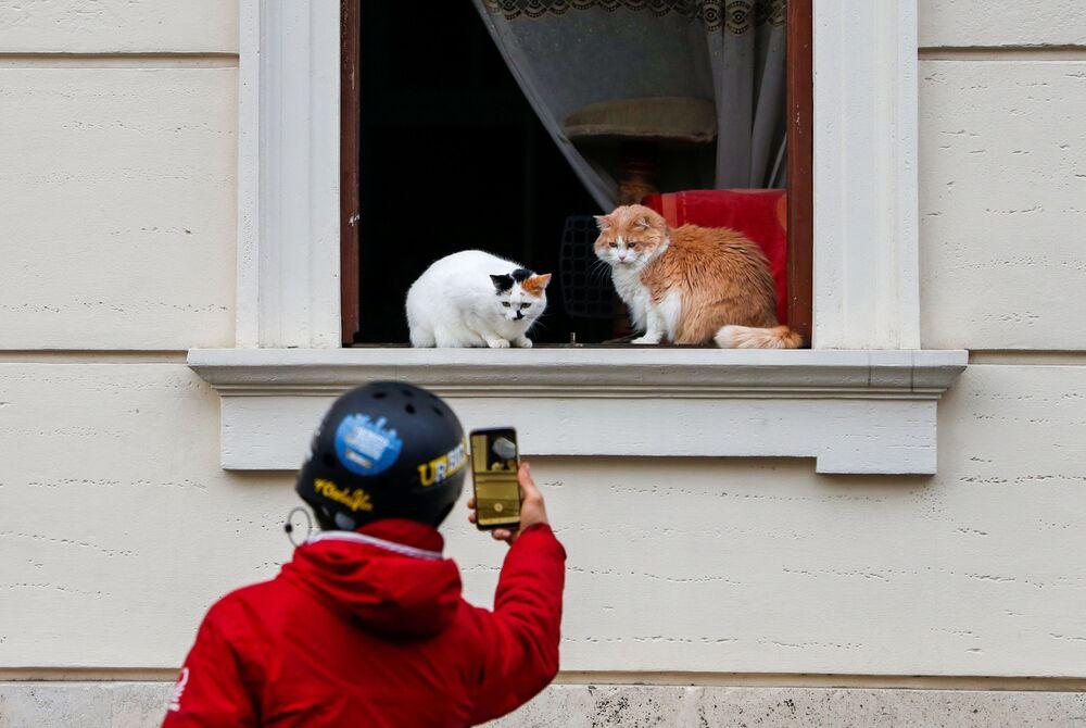 رجل يلتقط صورة لقطط جالسة على نافذة في روما، إيطاليا 11 يناير 2021