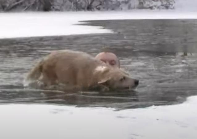 صحفي روسي يغطس في بحيرة متجمدة لإنقاذ كلب غارق