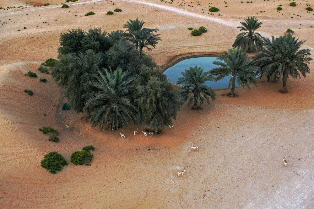 واحة صحراوية في منتجع تلال (Telal Resort) في ضواحي مدينة العين في أقصى شرق إمارة أبو ظبي الإمارات العربية المتحدة 26 يناير 2020.