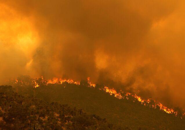 اشتعال حرائق الغابات في أستراليا 1 فبراير 2021