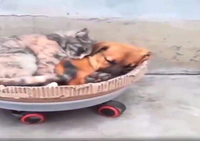 قطة وكلب في مشهد نادر