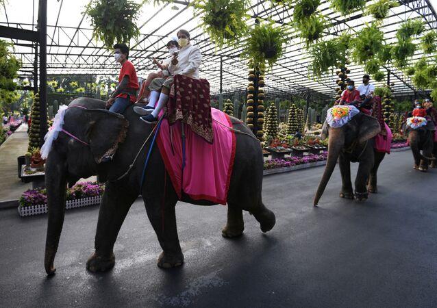زفاف جماعي على ظهور الأفيال في تايلاند بمناسبة عيد الحب