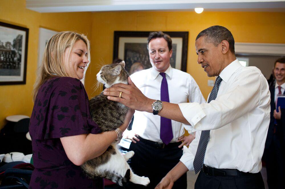 رئيس الوزراء البريطاني ديفيد كامرون يعرف القط لاري على الرئيس الأمريكي باراك أوباما في مقر رئيس الوزراء البريطاني في 10 داونينغ ستريت، 25 مايو 2011