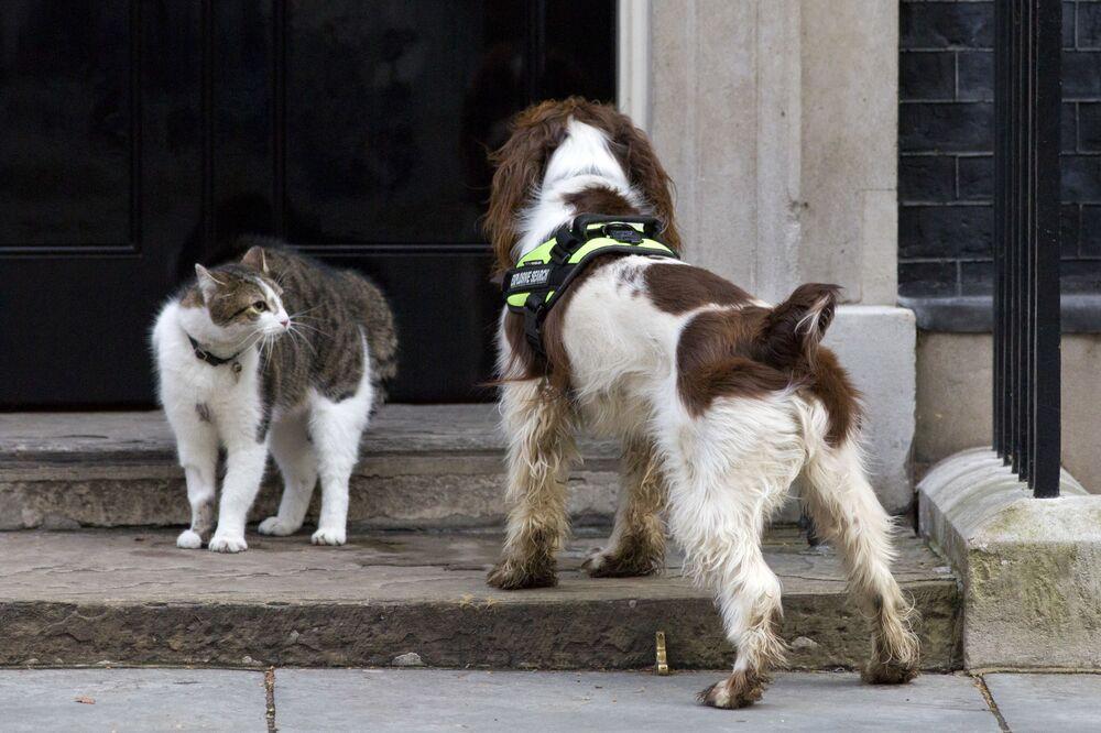 القط لاري في وجها لوجه مع كلب بايلي التابع للشرطة البريطانية، أثناء التفتيش الأمني عند المدخل لإإلى مقر رئيس الوزراء البريطاني في 10 داونينغ ستريت، 30 مارس 2015