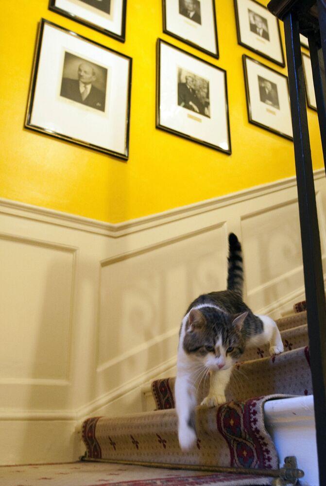 القط لاري ينزل من على السلم في منزل إقامة رئيس الوزراء البريطاني في 10 داونينغ ستريت في لندن، المملكة المتحدة 15 فبراير2021