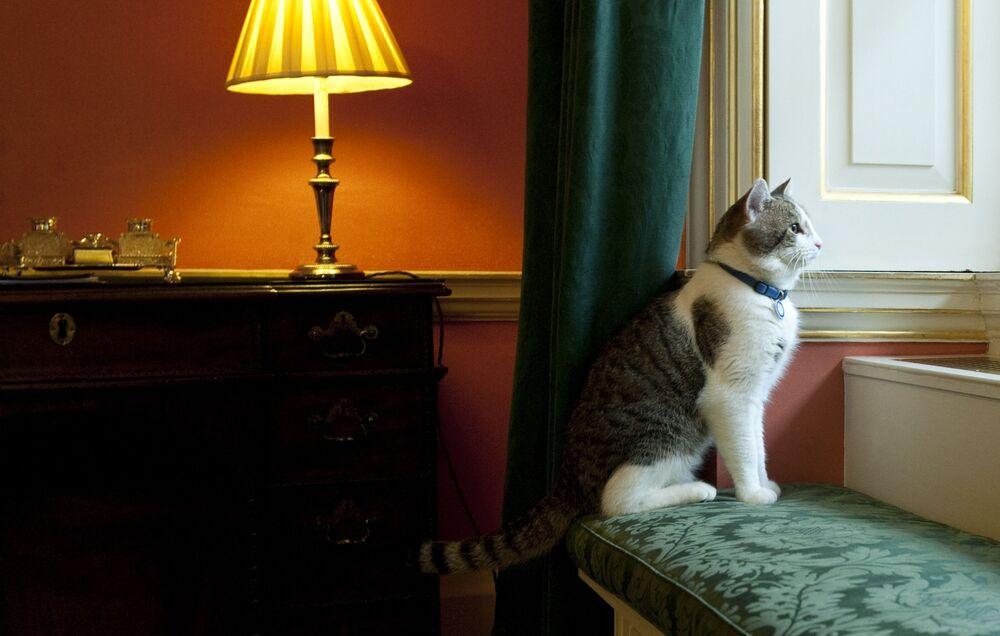 القط لاري ينظر إلى النافذة من داخل مقر رئيس الوزراء البريطاني في 10 داونينغ ستريت في لندن، المملكة المتحدة 15 فبراير2011