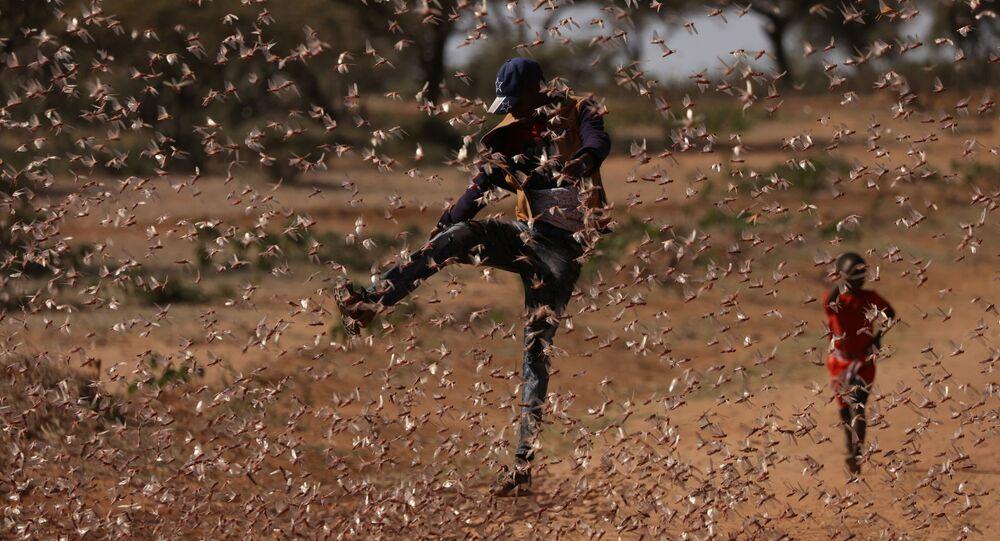 رجل يحاول مطاردة سرب من الجراد الصحراوي في نايبيريري، بالقرب من بلدة روموروتو، كينيا،22  فبراير2021