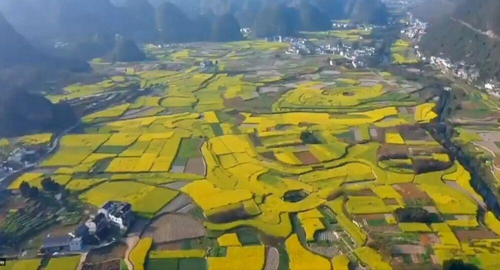 تفتح الزهور في الصين