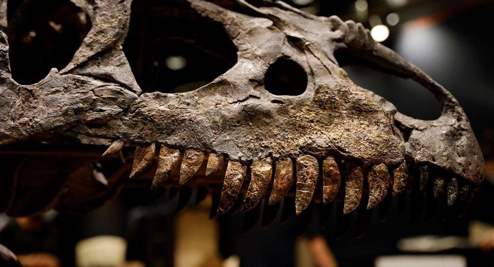 هيكل عظمي لفك ورأس ألوسوروس  من الديناصورات معروض في باريس