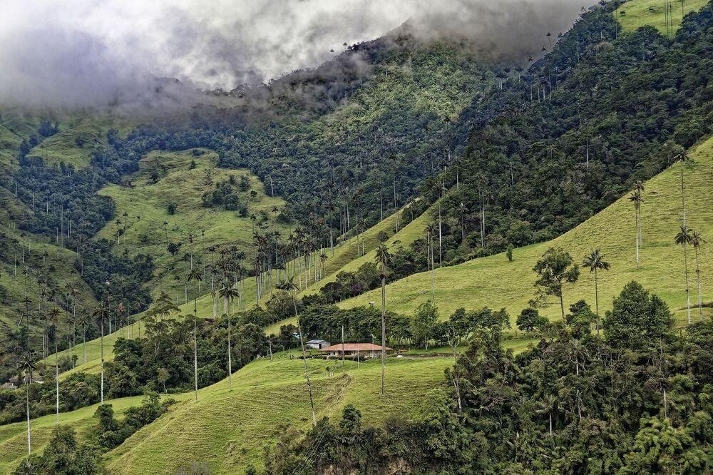محمية طبيعية في وادي كوكورا في كولومبيا