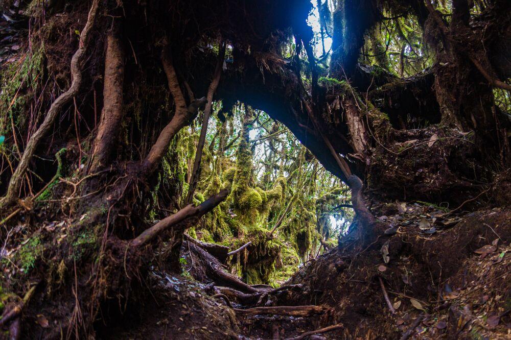 المحمية الطبيعية غابة موسي على سفوح جبل برينتشانغ في ماليزيا