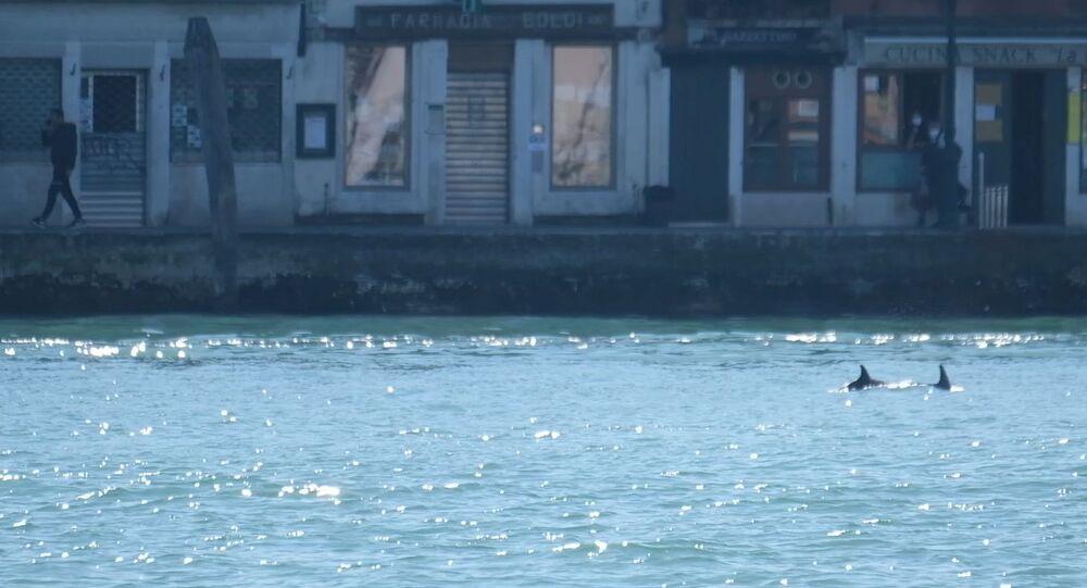 دلافين في قنوات مدينة البندقية الإيطالية