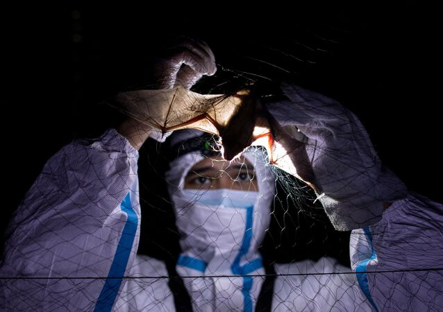 كيرك تاراي، أخصائي بيئة الخفافيش، يفك أسر خفاش علق في شبكة ضباب أقيمت أمام مبنى به خفاش في جامعة الفلبين لوس بانوس (UPLB) في لوس بانوس، مقاطعة لاغونا، الفلبين، 19 فبراير 2021