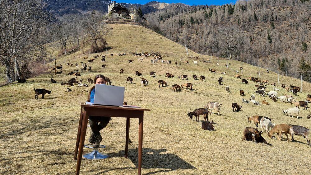 فياميتا، البالغة من العمر 10 سنوات، خلال درس عبر الإنترنت، محاطة بحيوانات الماعز في مرعى تابع لوالدها في كالديس، إيطاليا 20 مارس 2021