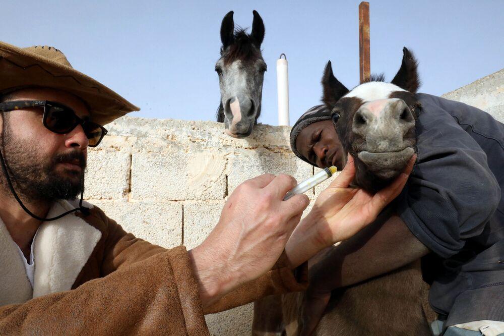 مربي ومدرب ليبي للخيول العربية الأصيلة، عبد السلام الورفلي، يعتني بأحد خيوله في إسطبله في مدينة بنغازي، شرق ليبيا 22 مارس 2021
