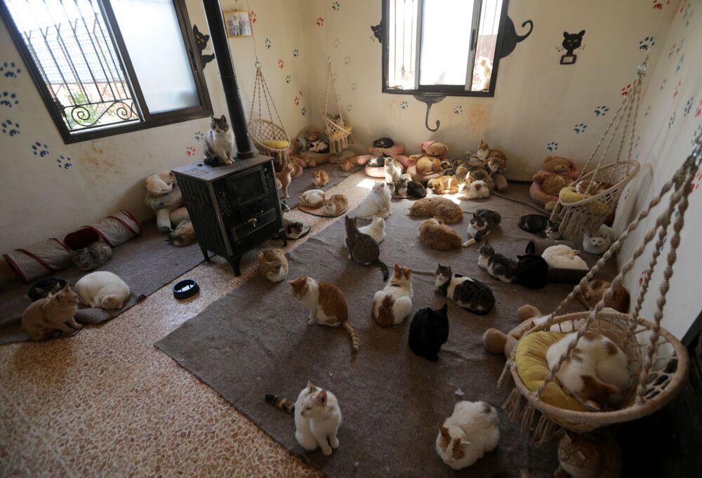 مأوى إرنيستو (Ernesto's sanctuary) للقط في إدلب، سوريا 28 مارس 2021
