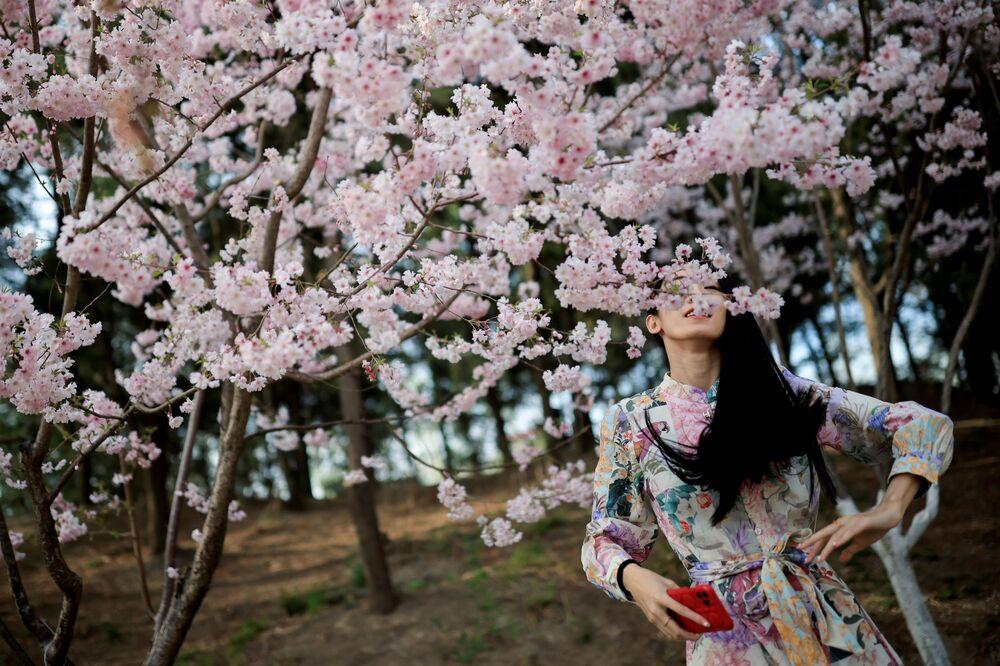 فتاة تلتقط صورا على خلفية تفتح أزهار شجر الكرز الشهيرة في هذا الوقت من العام، بكين، الصين 31 مارس 2021