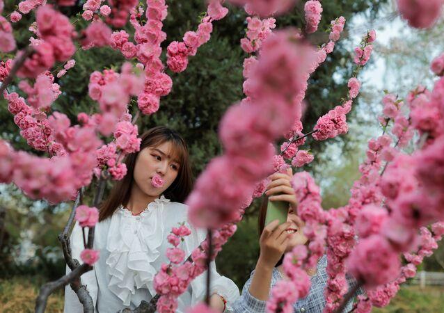 فتيات يلتقطن صورا على خلفية تفتح أزهار شجر الكرز الشهيرة في هذا الوقت من العام، بكين، الصين 31 مارس 2021