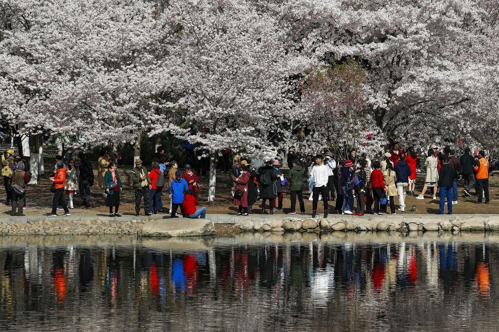 زوار يلتقطون صورا لأزهار شجر الكرز الشهيرة في هذا الوقت من العام، بكين، الصين 31 مارس 2021