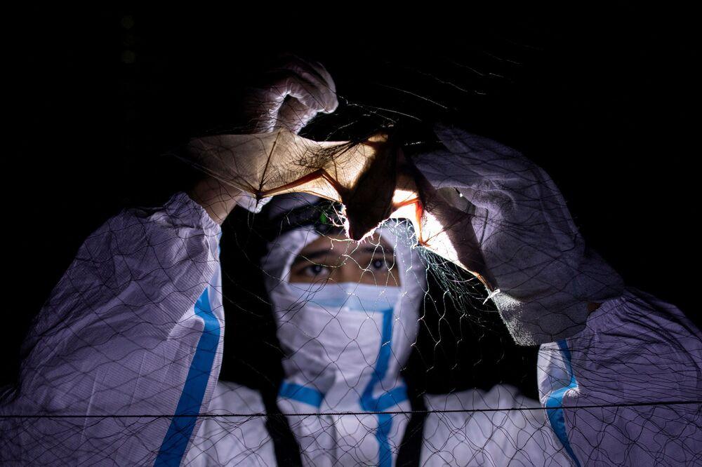 أخصائي علم الخفافيش، كيرك تاراي، يفك أسر خفاش عالق في شبكة، يرتدي زي الوقاية لحماية أنفسهم من التعرض للخفافيش في جبل ماكيلينغ في لوس بانوس، مقاطعة لاغونا، الفلبين، 18 فبراير 202