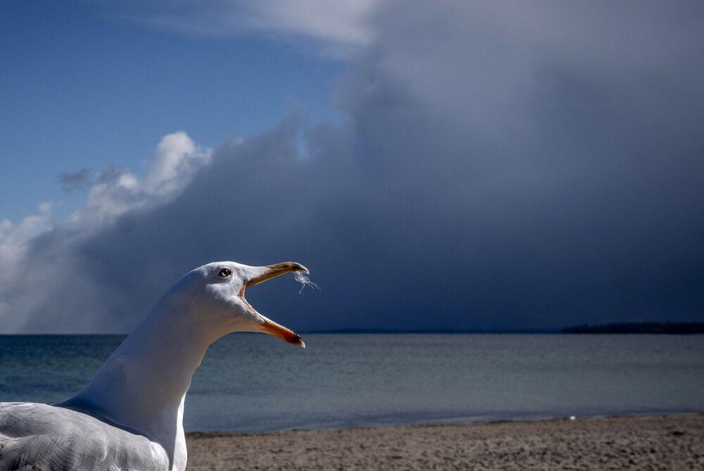 طيور النورس على شاطئ بحر البلطيق في تيميندورفير ستراند، مع اقتراب عاصفة ثلجية في الخلفية، ألمانيا 6 أبريل 2021