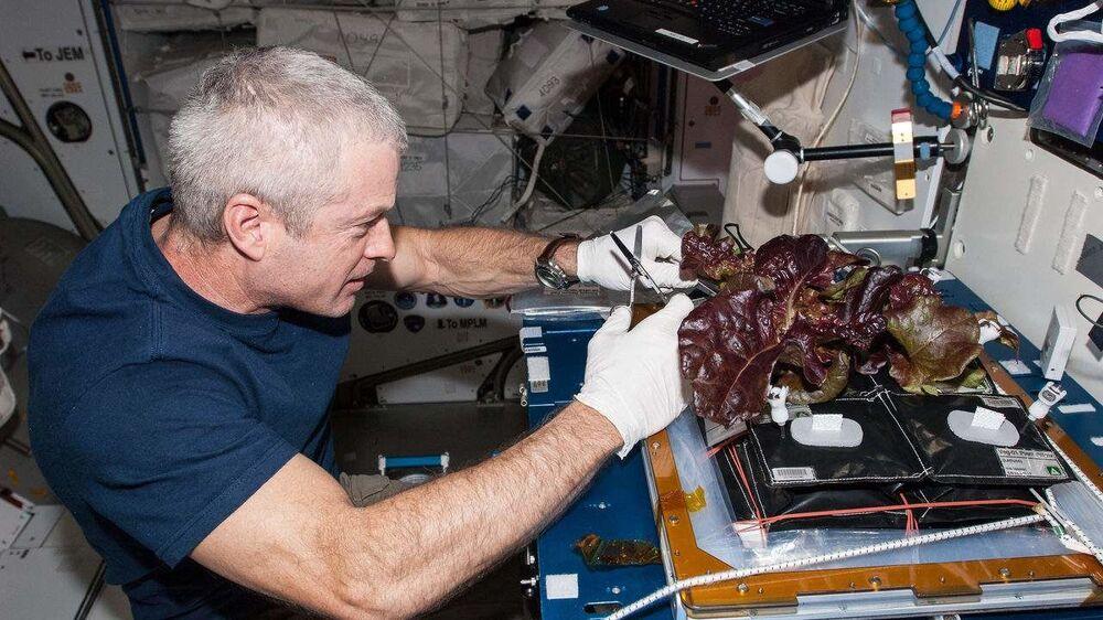 رائد الفضاء الأمريكي ستيفن سوانسون يجمع الخس المزروع في محطة الفضاء الدولية