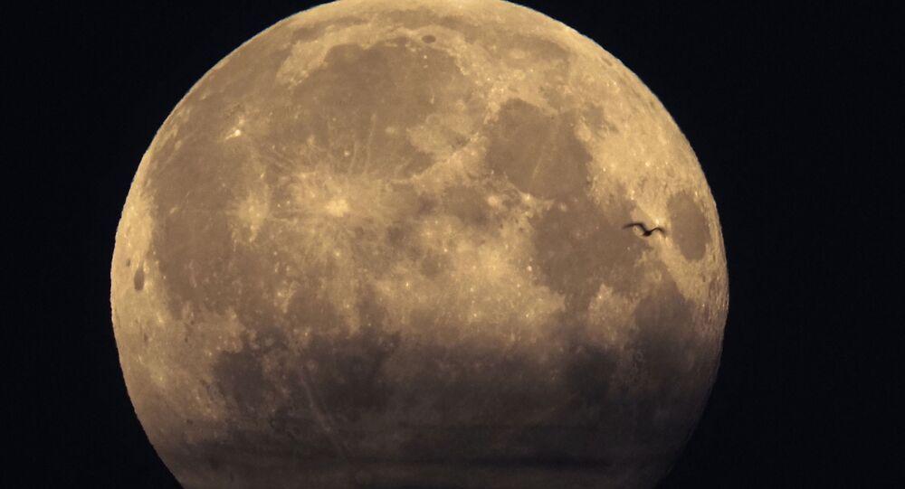 ظهور طائر أمام القمر
