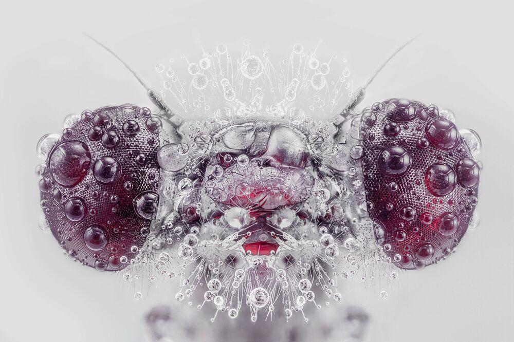 صورة وحش (صورة مقربة لحشرة تريثيميس أنالوتا Trithemis annulata)، للمصور الإسباني بيدرو لويس أجورياغيرا، حصلت على تقدير عالي في مسابقة توزيع جوائز كل شيء عن الصورة لعام 2021