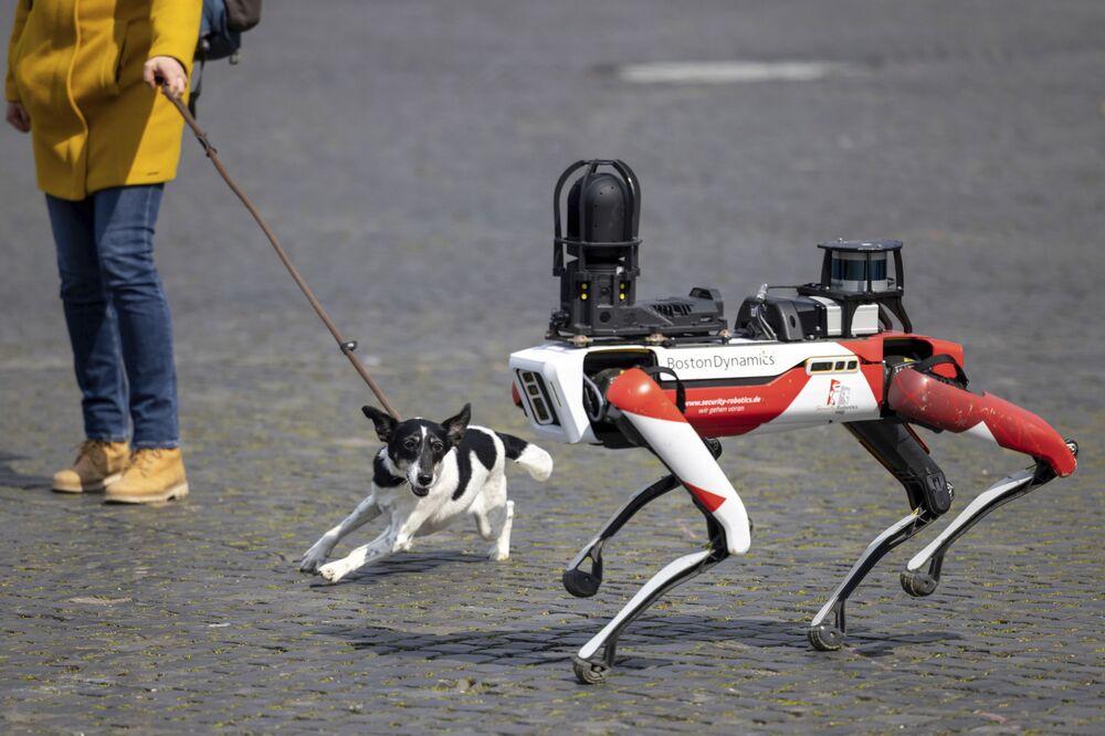 كلب ينبح لدى رؤية كلب آلي في ساحة كاثيدرال سكوير في إرفورت، ألمانيا 20 أبريل 2021