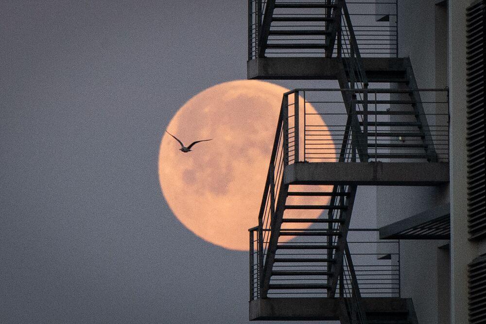 قمر وردي عملاق في لورينت، غرب فرنسا 26 أبريل 2021